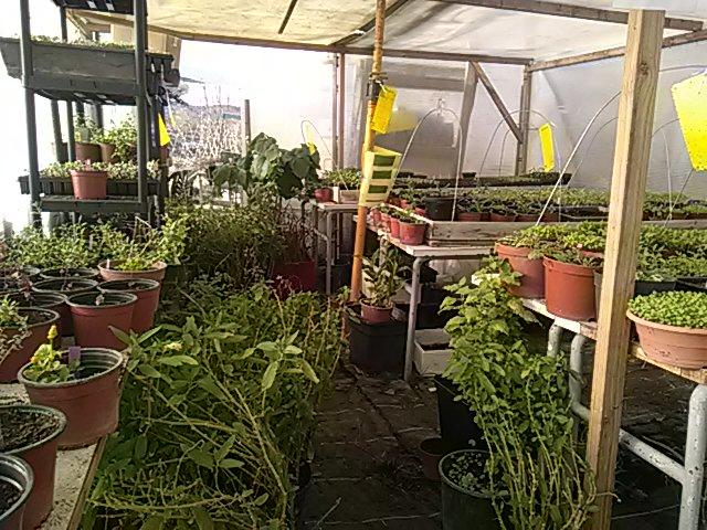 La Nurserie des plants